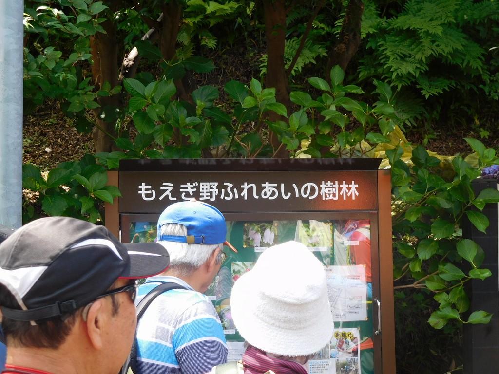 樹林に咲いている花の紹介掲示板を見入る