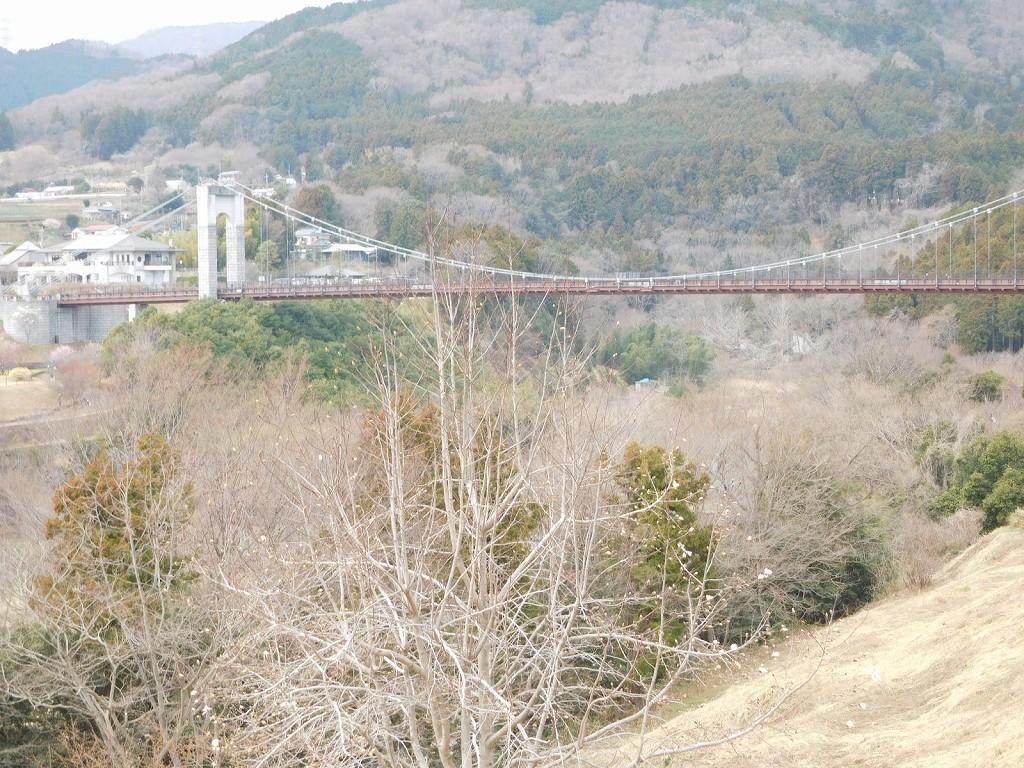 丘から 風の吊り橋を眺めます