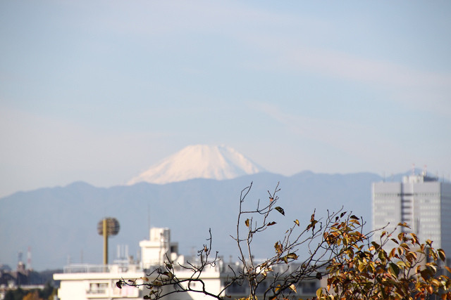 多摩川から冠雪した富士山が綺麗に見えます
