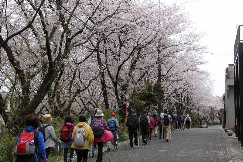 桜の景色を楽しんでウォーキング