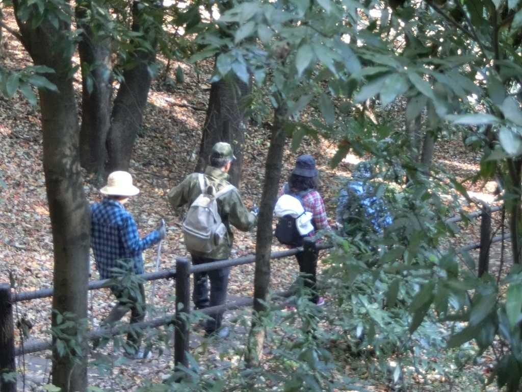 北八朔公園内の降り階段「落葉でスリップ注意」の声が!!