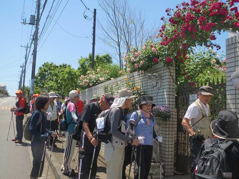 荏田南にある「薔薇屋敷」と呼ばれる薔薇好きな御宅で薔薇の観賞
