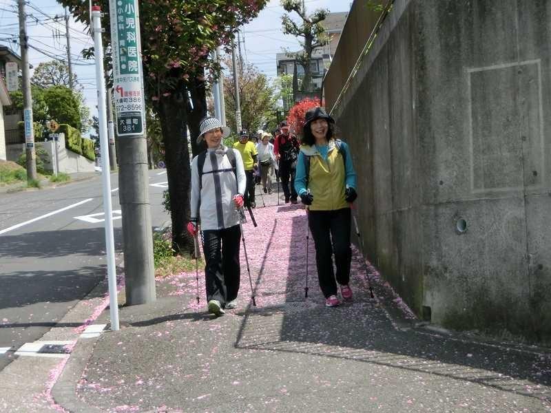 この通りは既に八重桜が散っているがピンクの絨毯状態です