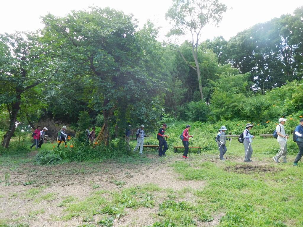 野萱草・ヒヨドリバナを眺めウォーキング