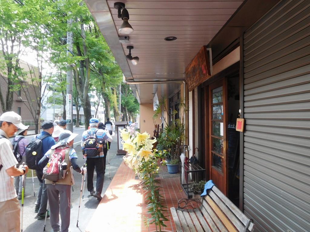 商店街には色付きカサプランカか大きなバラが咲いてます