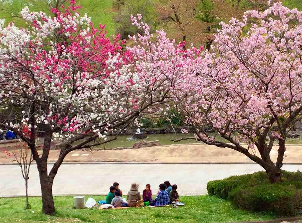 桜の下で一家団欒
