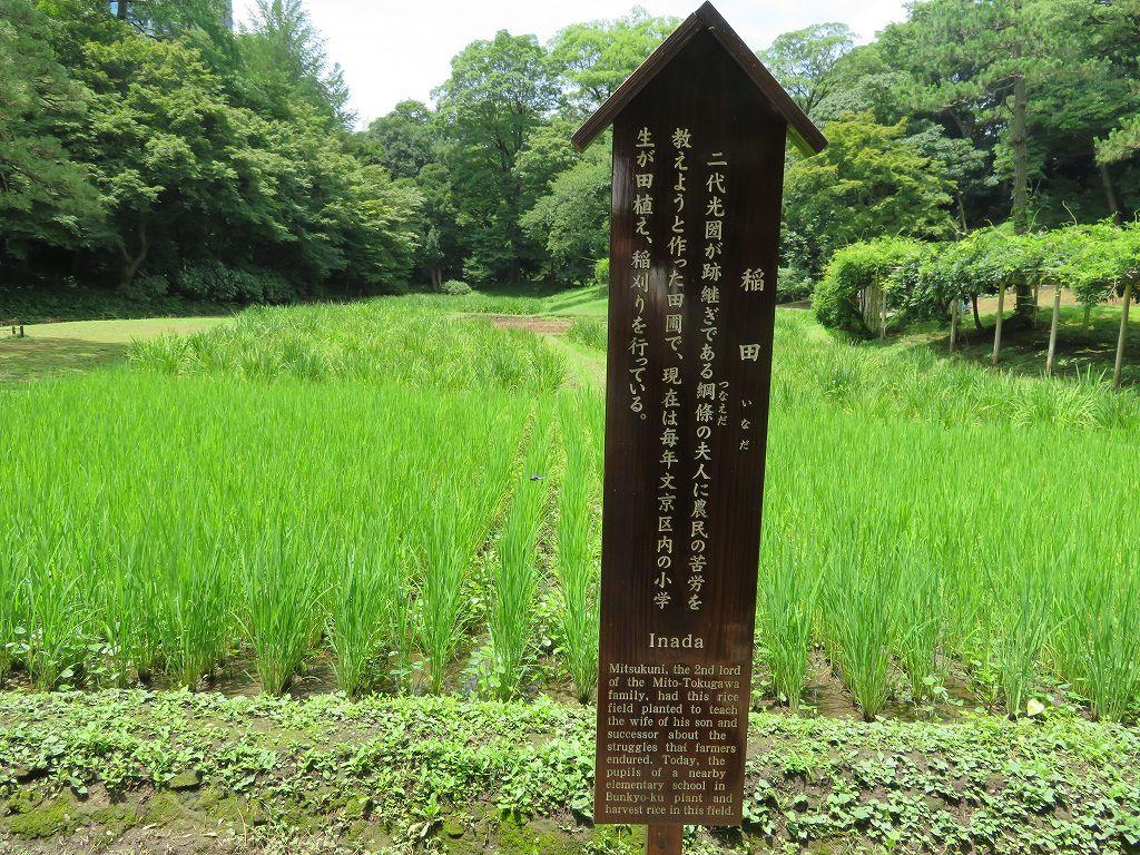 庭園の中に稲田が有るのは後楽園だけらしい