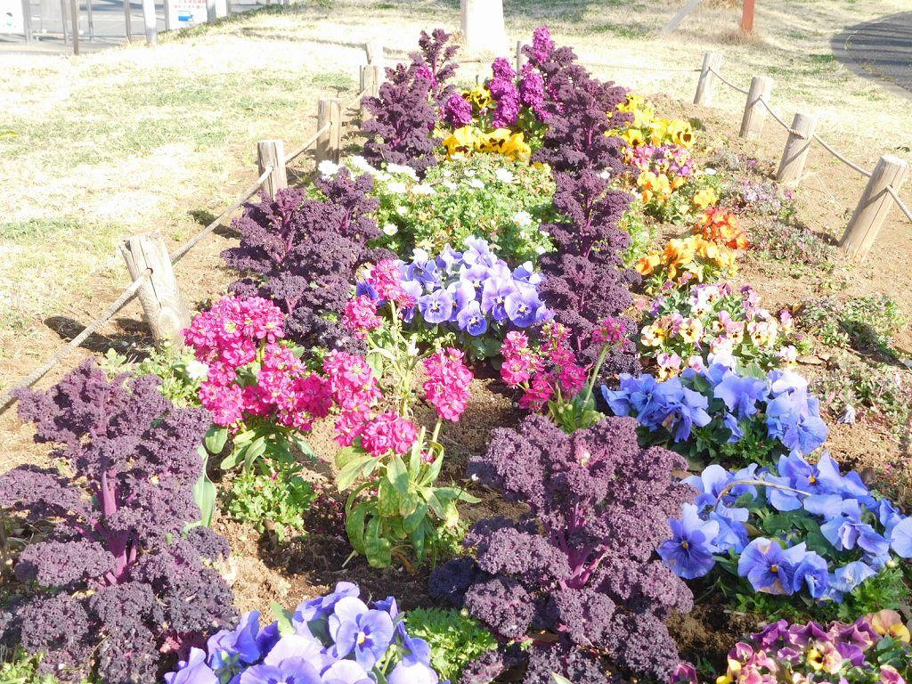 谷本公園の花壇は綺麗