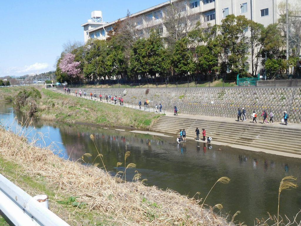 バックの建物は市ヶ尾高校です 青空に桜が綺麗ですね