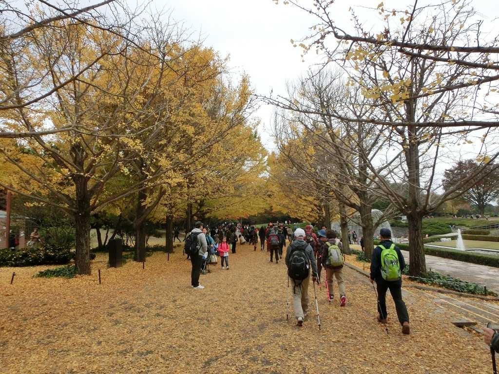 落葉で黄色の絨毯上を1班がウォーキング