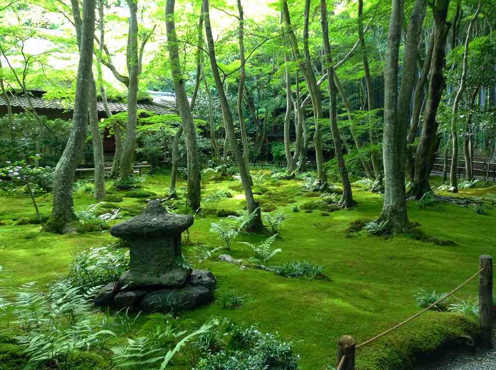 平家物語悲恋の寺「祇王寺」の苔庭