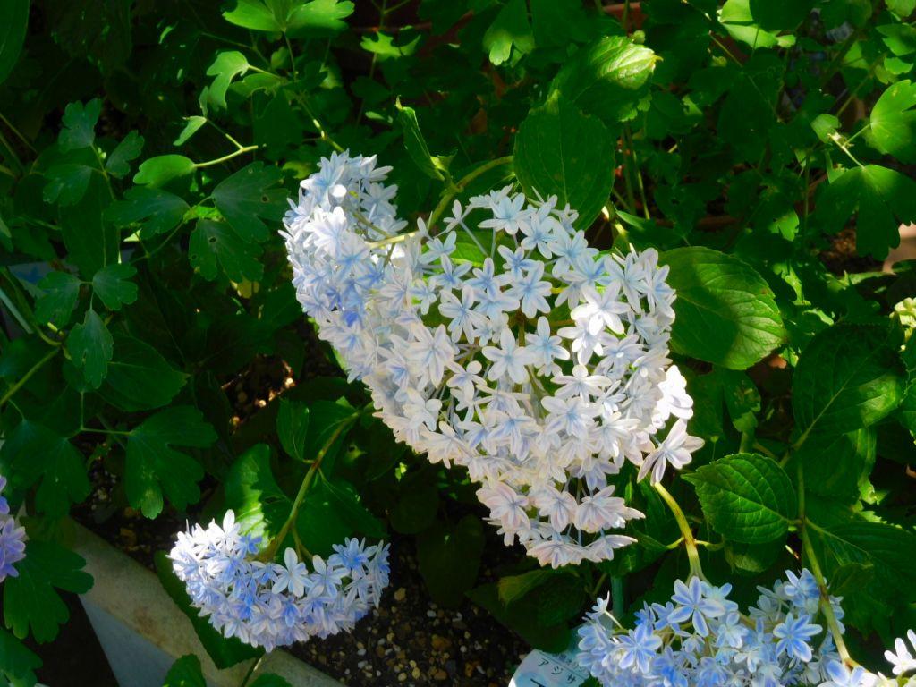 えだきんのフラワーガーデンに咲く花々