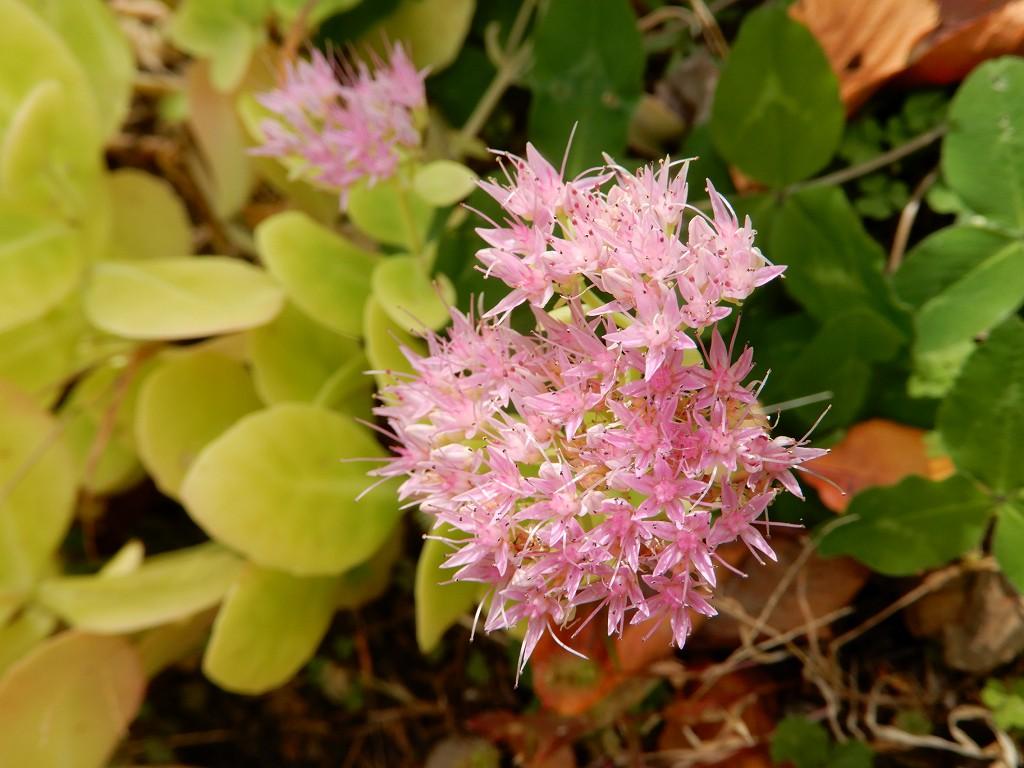 片倉館前庭に名前不明の花が咲いてます