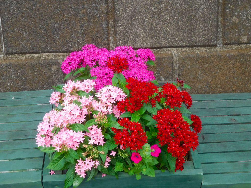旧大山街道には花の鉢が数個置かれています