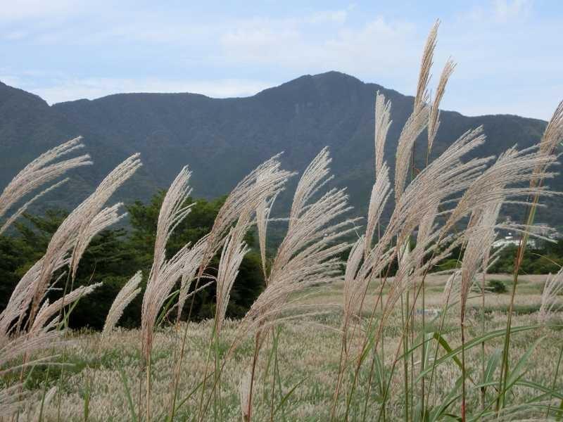 風に揺れるススキ 遠くの山は !!