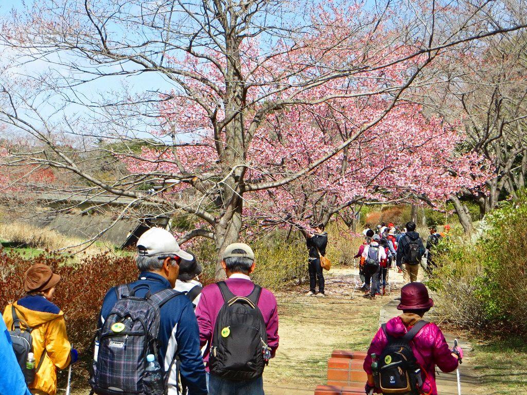 残堀川 旧桜の園を歩く
