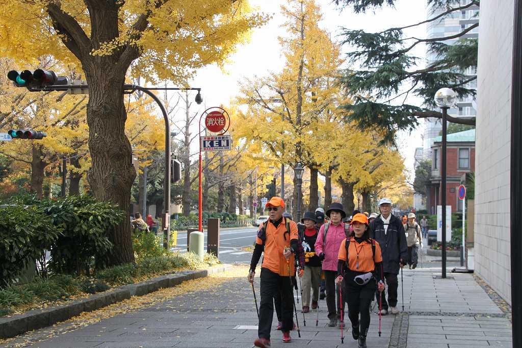 黄葉の日本大通りを歩く