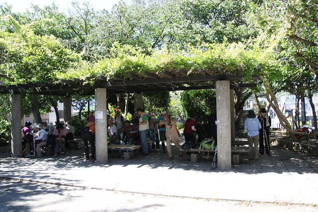 昼食後 集合場所には藤棚の木陰で涼んでいます