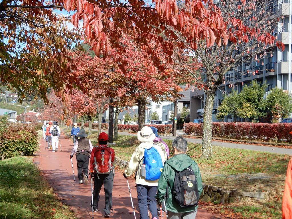 紅葉した街路樹の下をウォーキンク゛