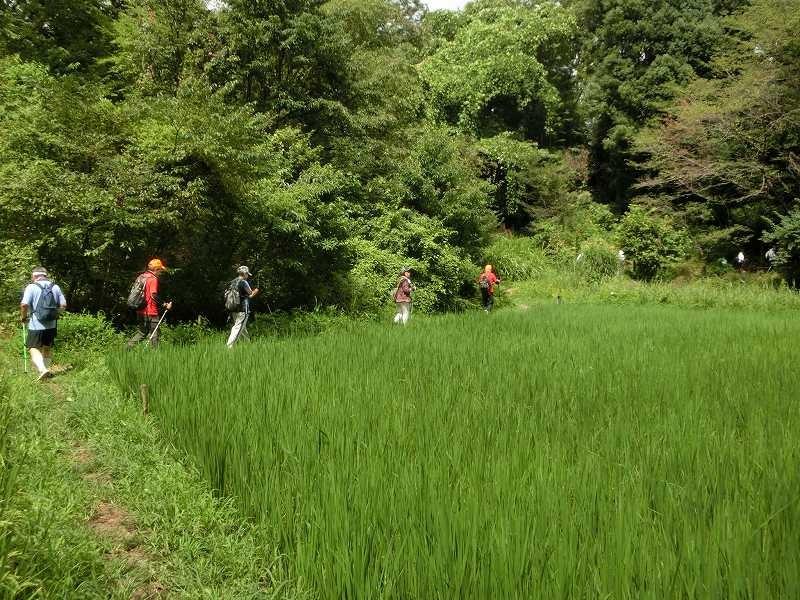 自然生態園には田植えの体験できる田圃もあり、初めての人はビックリ