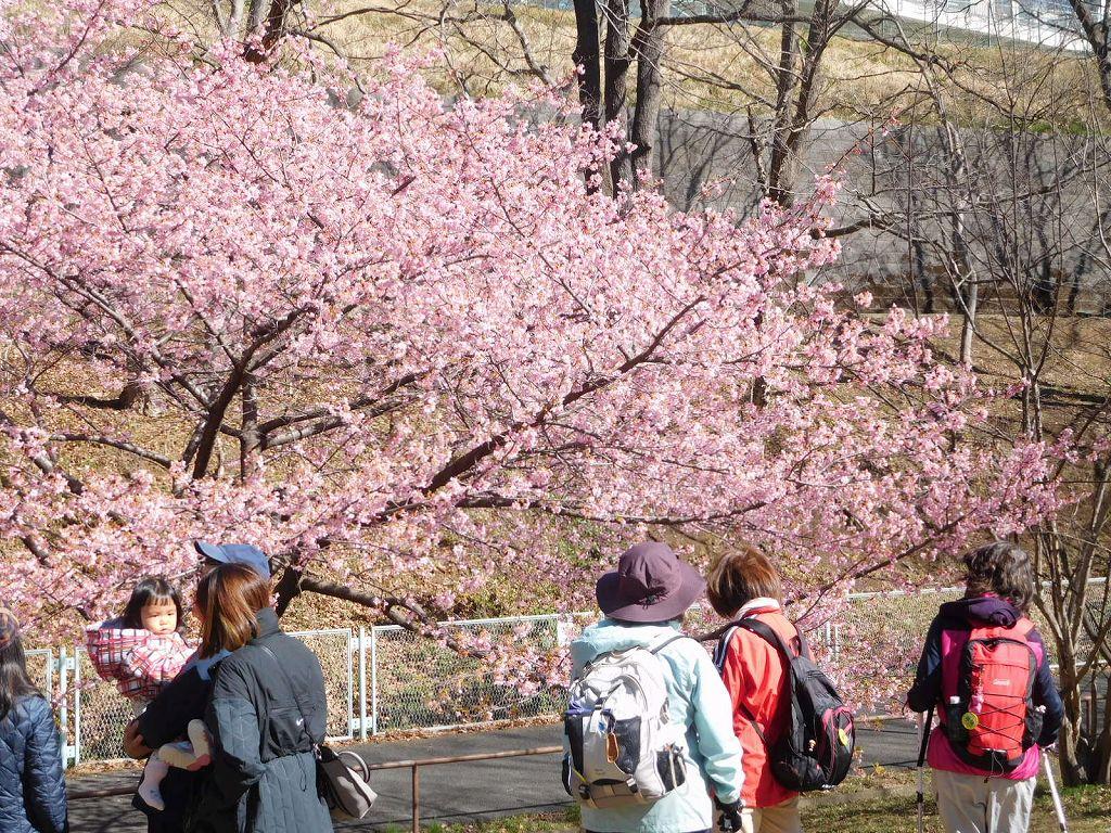 子連れの親子も観桜中です