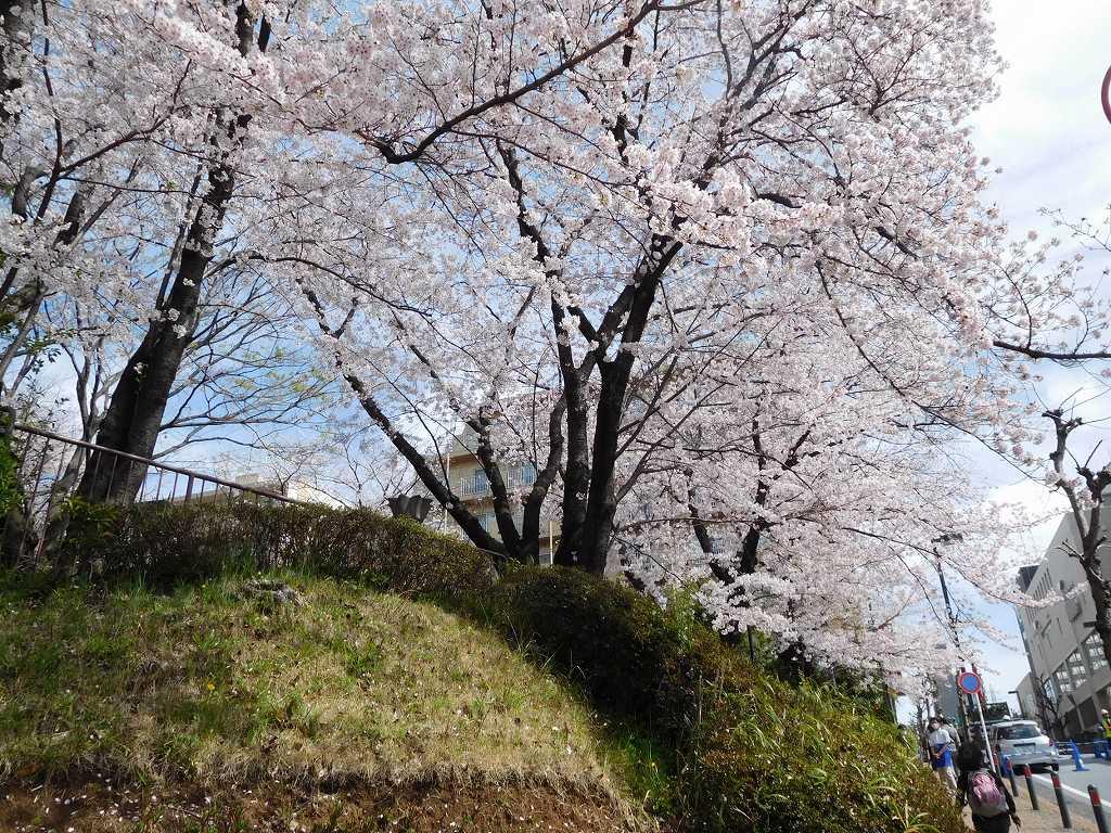 桜満開の「市が尾第三公園」でウォーミングアップ