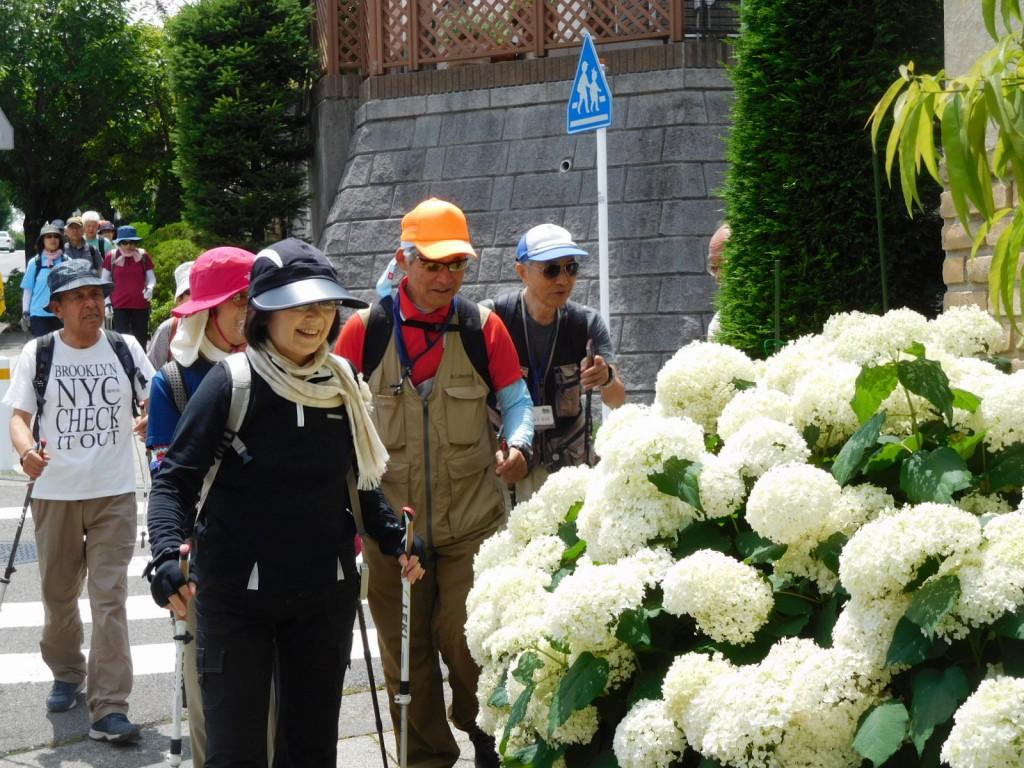 紫陽花の白さに見惚れている皆さん、ご主人も満足そうに解説されてました