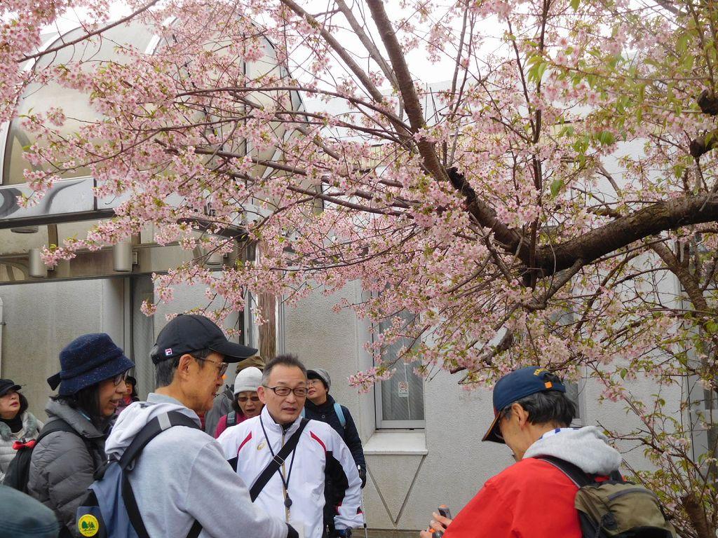 男性群も桜の下で歓談