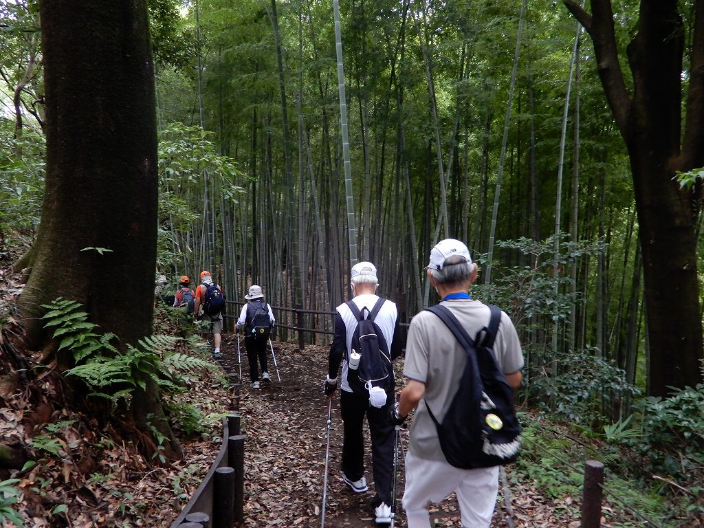 この道を初めての人も「この竹林は凄い!! 」との声