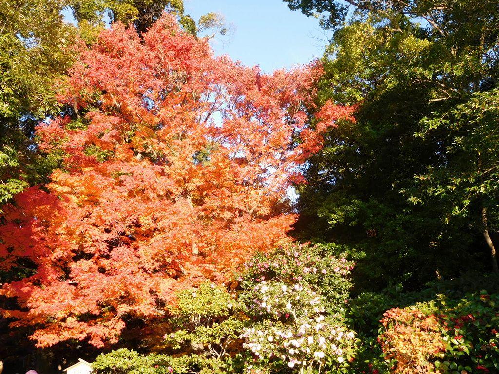 徳川園に入って早々の紅葉です