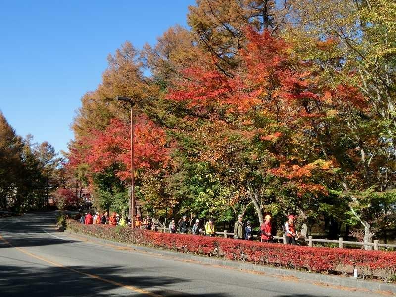 紅葉の綺麗な路を一列でウォーキング