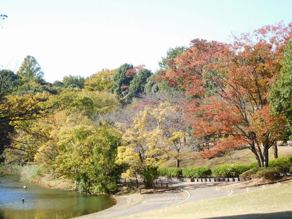 鴨池公園の紅葉