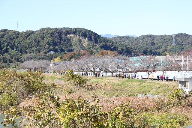 多摩川の桜並木 春はさぞ美しいでしょうね