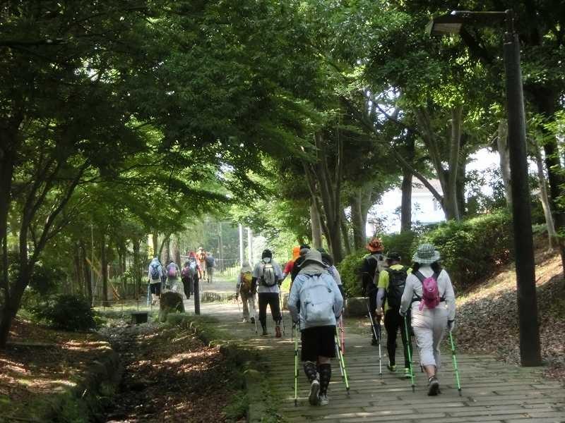 木陰の多い矢崎の道