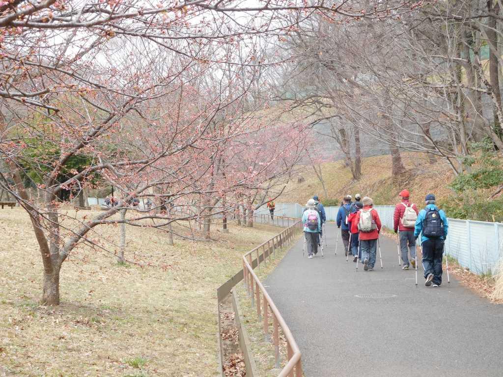北八朔公園の河津桜も3~5輪しか咲いておらず残念