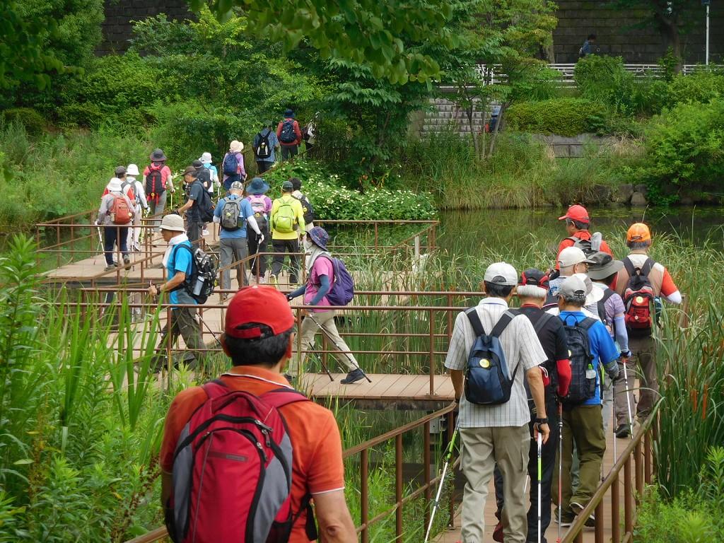 池を横断するデッキの上を歩く
