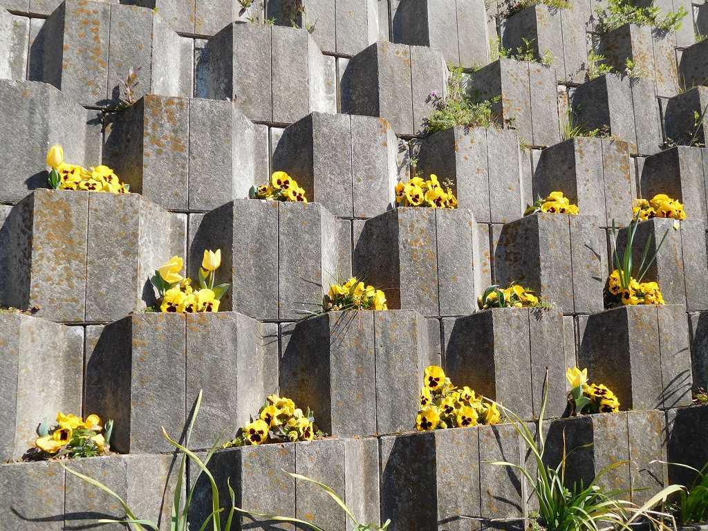 横壁には中学生・高校生・地域のボランティアにより花が植えられています