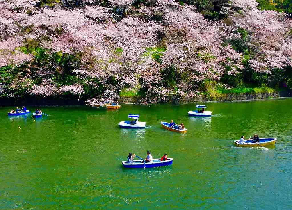 桜の下を漕ぐ