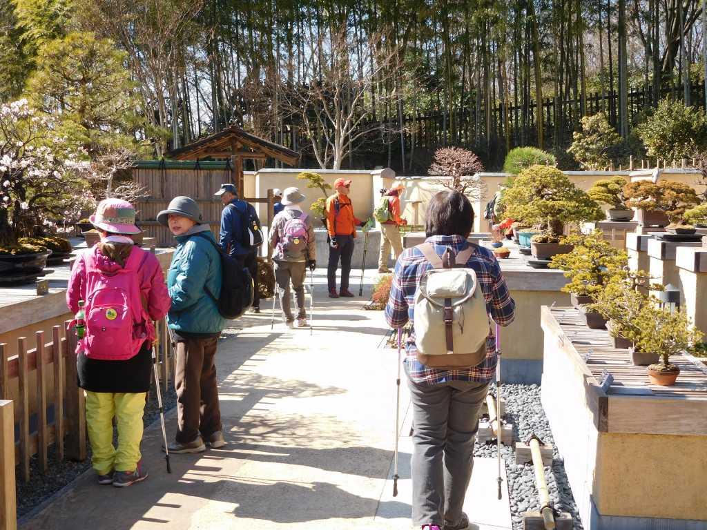 日本庭園で盆栽観賞