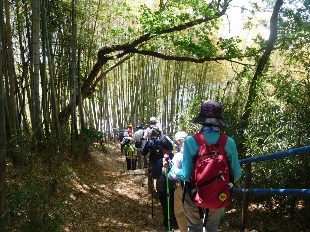 竹林の中を降りて行きます