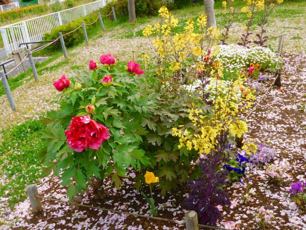 公園の花壇も綺麗です 石南花も咲いてました