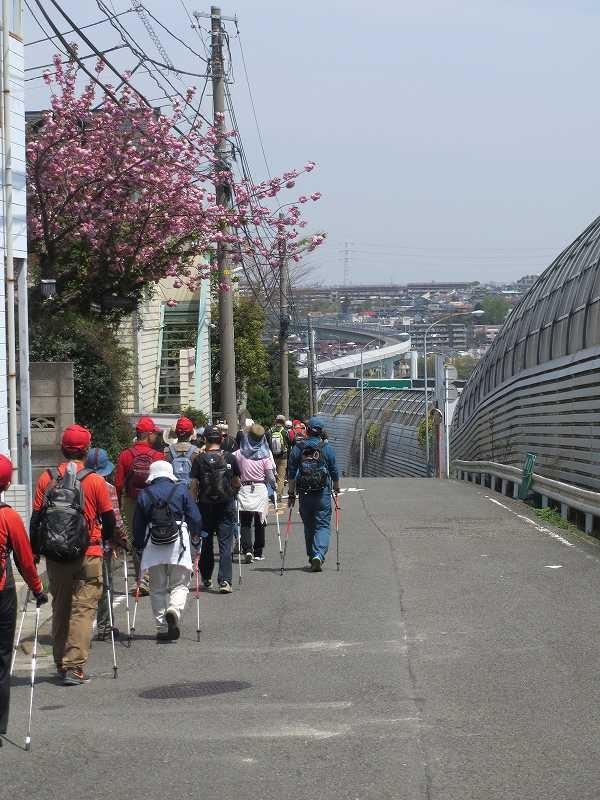東名高速側道をウォーキング。民家には八重桜が満開