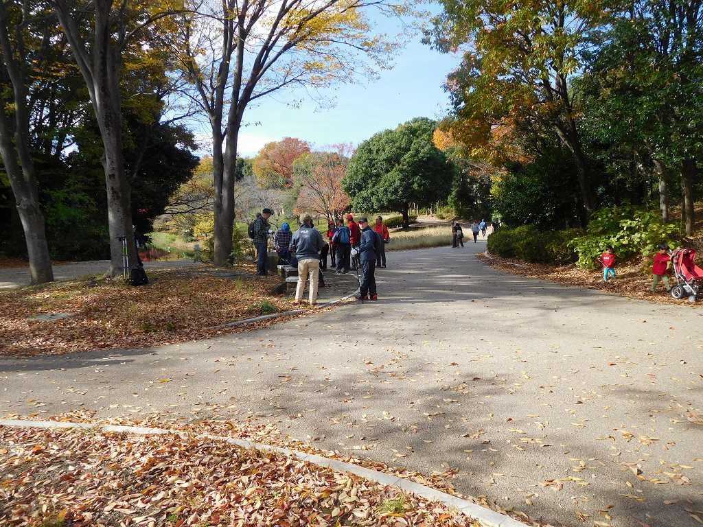 鴨池公園で休憩 黄葉が綺麗でした