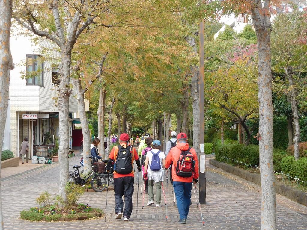えだきん商店街の街路樹の黄葉も始まった感じです
