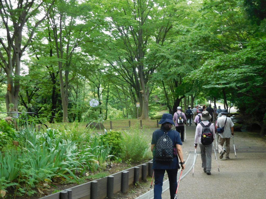 緑濃い公園内です 気持ちよく歩けますね