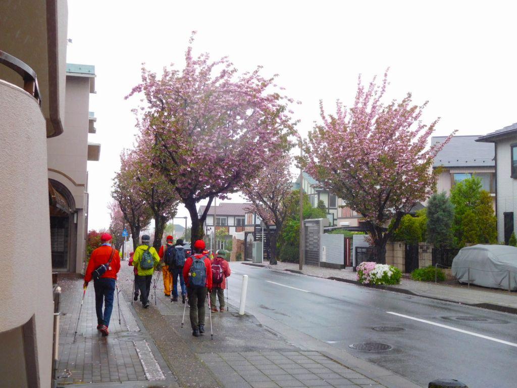 両サイド八重桜・八重桜です