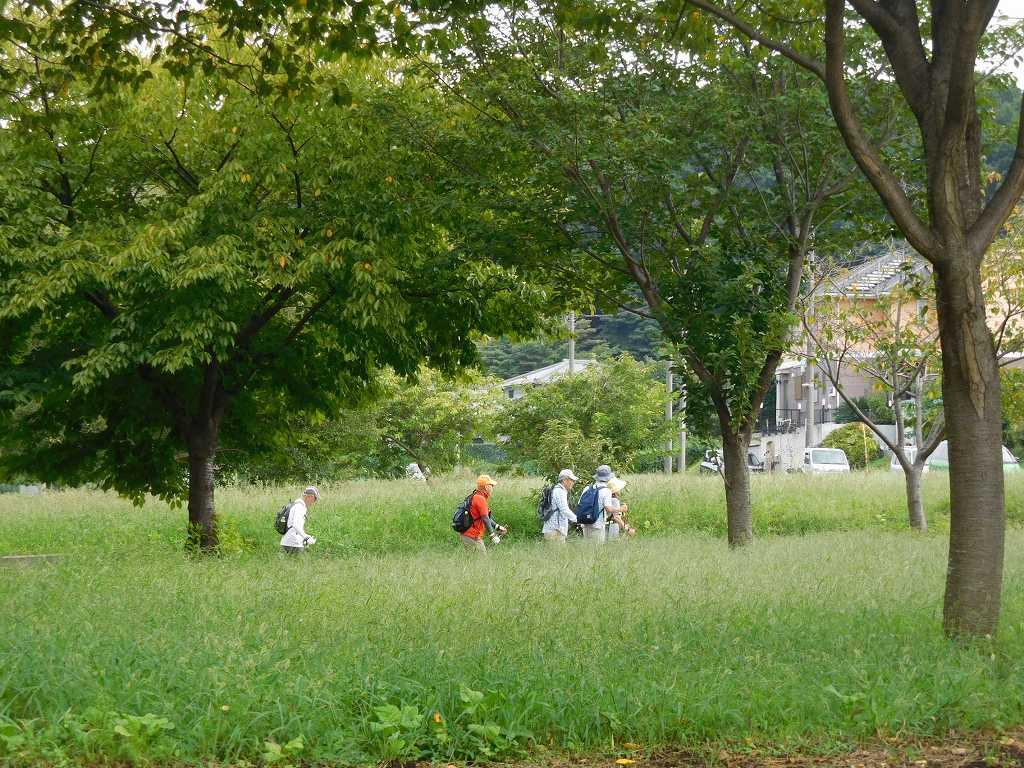 川和駅を出て緑多い道をウォーキング