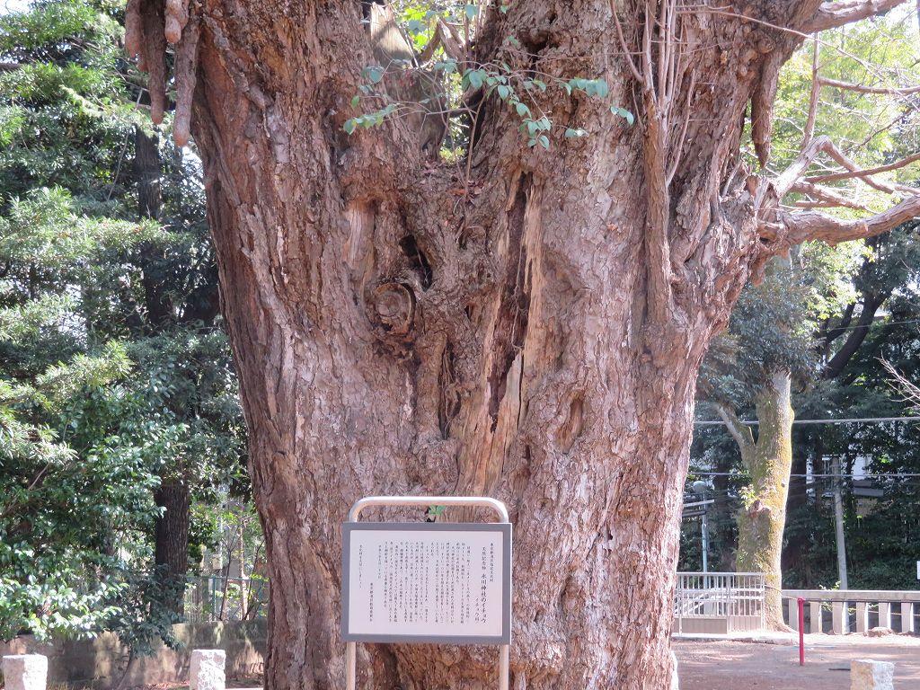 都内で二番目に大きな銀杏(樹齢400年)