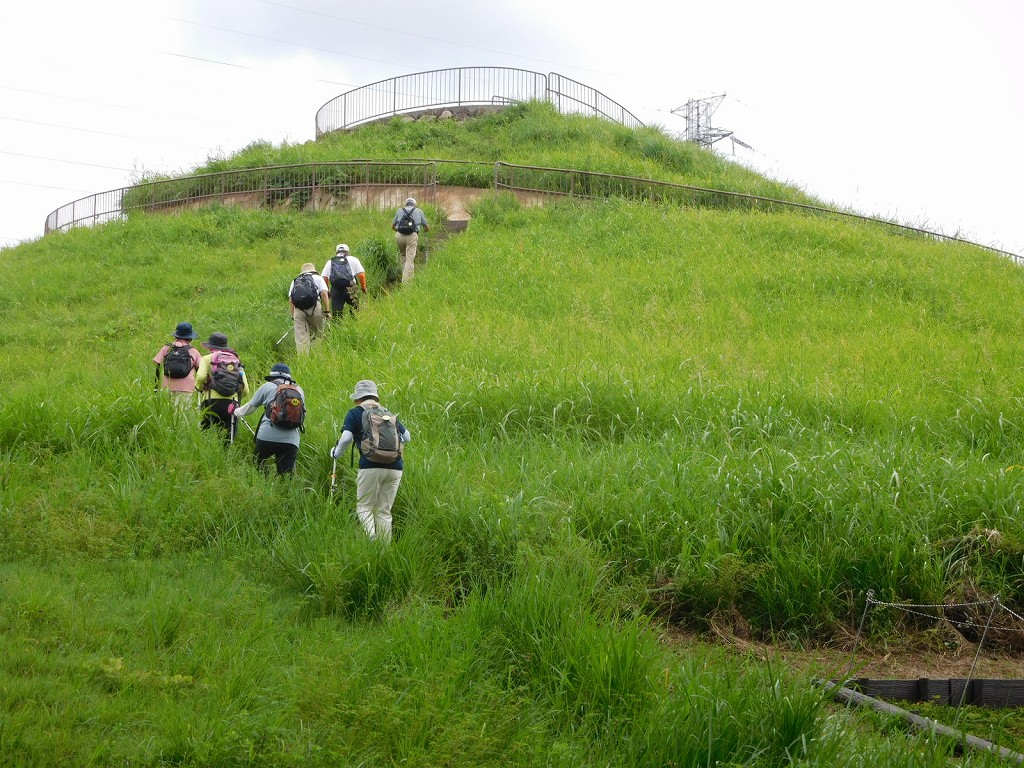川和富士公園 緑が映えてますね