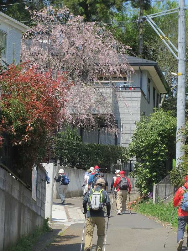 途中の民家にも枝垂れ桜がまだまだ綺麗に咲いている